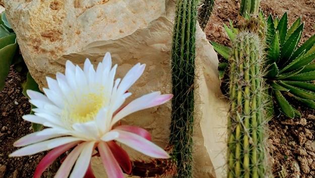 Atlantis Cactus Park nasce no Zambujal