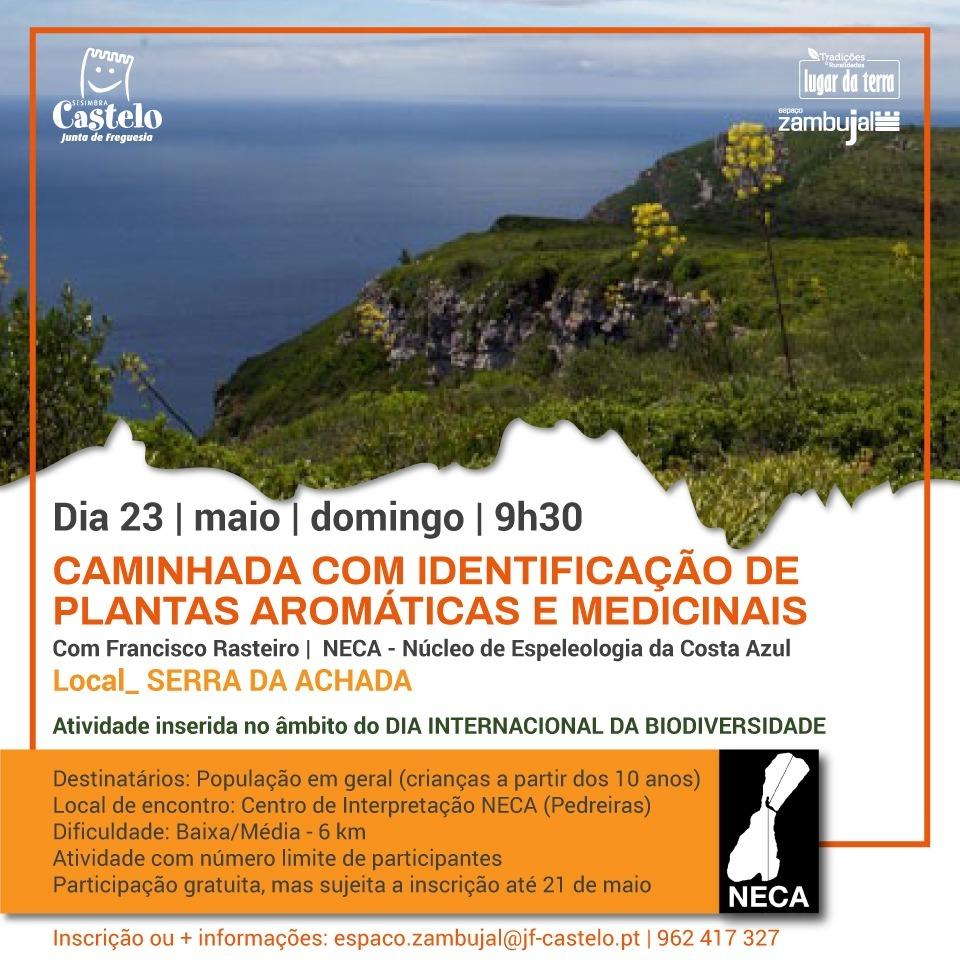 CAMINHADA | Identificação de Plantas Medicionais e Aromáticas