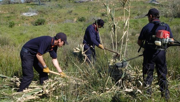 REVISÃO | Plano Intermunicipal de Defesa da Floresta Contra Incêndios
