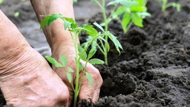 ADREPES - Candidaturas abertas para apoios a projetos na área da agricultura