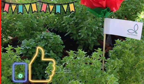 Arraial Solidário | CERCIZIMBRA
